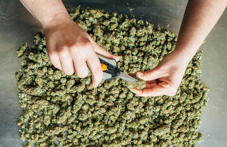 Where you can Buy Legal Medicinal Marijuana – Helpful tips for Dispensaries and Clinics